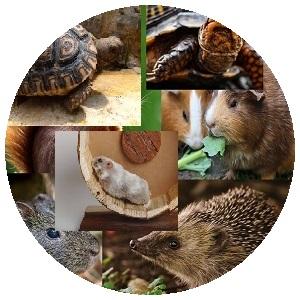 حيوانات أخرى (هامستر ، قنافذ ، سلاحف ، أرنب غيني و غيرها ... إلخ)