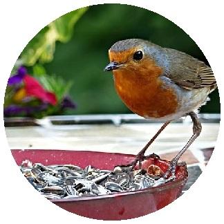 غذاء الحمام و العصافير