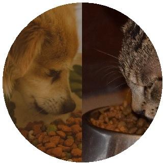 غذاء الكلاب و القطط