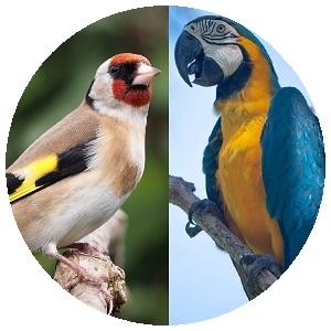 عصافير و ببغاوات