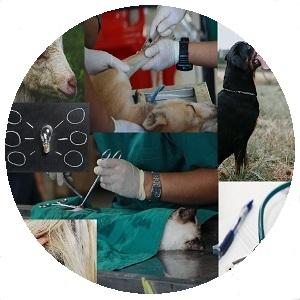 خدمات متعلقة بالحيوانات