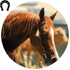 لوازم أحصنة