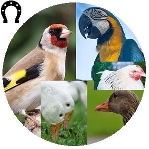لوازم كل الطيور و الدواجن بأنواعها