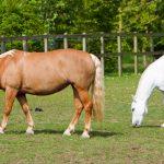 هل للحصان خمس قلوب ؟