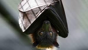 كيف يستطيع الفراش الهروب من الخفافيش بسهولة ؟؟
