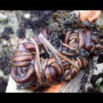 القضاء على الحشرات من خلال سم دودة بوتـــــلاس