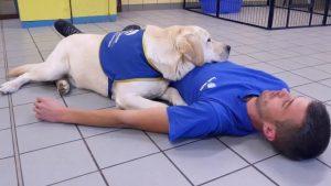 مشروع لتدريب الكلاب ليكونوا مساعدين للمصابين بالصرع!