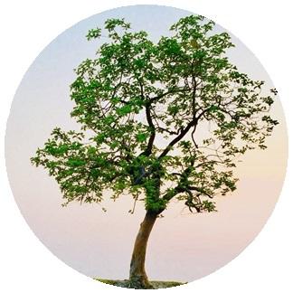 أشجار أكثر من 5 متر