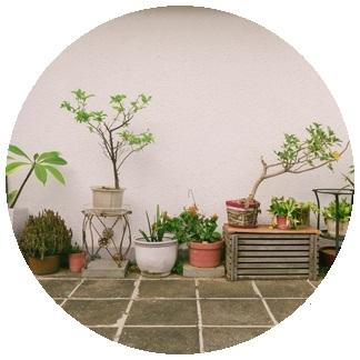 نباتات